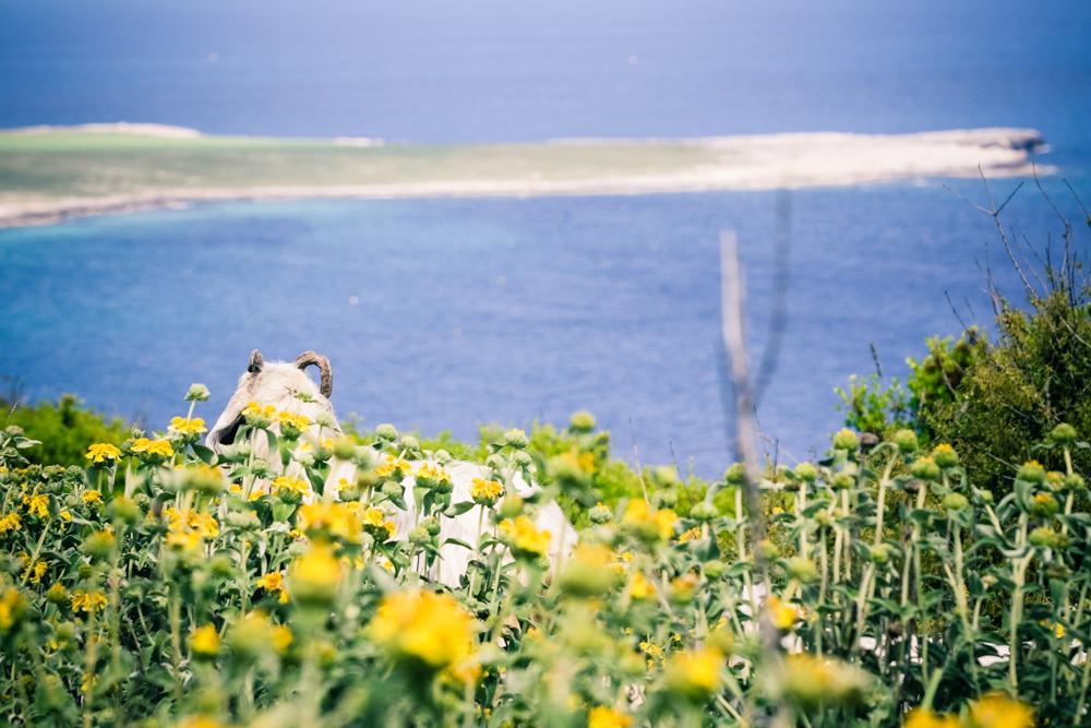 michele catena photography landscape italy puglia goat capra